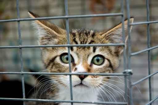 Die Katze aus dem Zoohandel