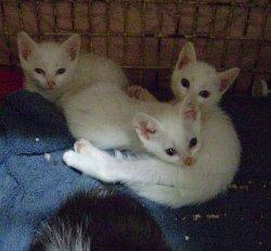 new-kittens6250