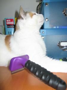Mit viel Vorsicht wird das Bürsten mit dem FURMINATOR auch für empfindliche Katzen ein Genuss