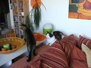 Lisbeth bewegt sich in ihrem Revier wie eine völlig gesunde Katze. Foto: mit freundlicher Genehmigung von Elke Steigerwald