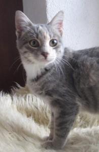 Feline: Verschmustes Katzenmädchen sucht Familie