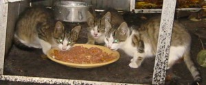 Vier kleine Katzen suchen ein Zuhause