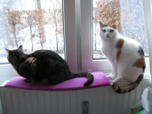 Die Heizung ist ein perfekter Schlafplatz für gelenkkranke Katzen