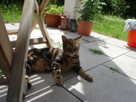 Katzen sind Meister darin, Erkrankungen zu kaschieren - das gilt auch für Gelenkprobleme.