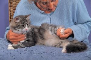 """TTouch an der Hinterpfote. Bild aus dem Buch """"TTouch für Katzen"""", mit freundlicher Genehmigung des Kosmos-Verlages."""