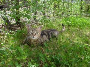 Wie viel Wildkatze steckt in unseren Hauskatzen? Foto: Lena Landwerth
