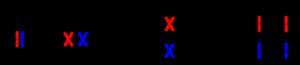 Schematische Darstellung der Meiose. Grafik: Wikipedia.de