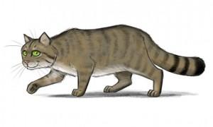 Namenslose Wildkatze sucht Namen! Quelle: spehzies.de/BUND