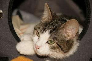Katze Sari hat trotz Ataxie ein schönes Leben. Foto: Barbara Helferich